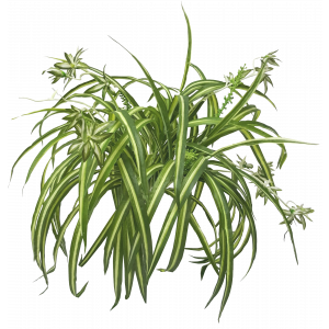 Spider Plant with 79 Leaves Real Touch