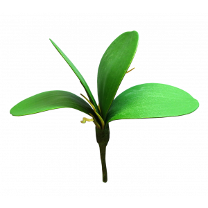 Small Orchid Leaf