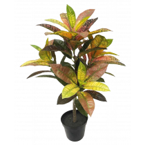 S2855MX 61cm Red Yellow Croton in Pot