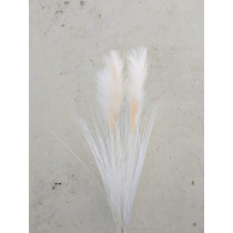 S2402Crm Cream Pampas Grass Bush