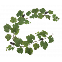 6ft Grape Leaf Ivy Garland with fruit