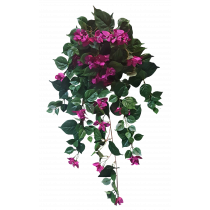 Bougainviilea Hanging Bush x 12