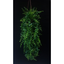 Hanging Baker Fern in Pot