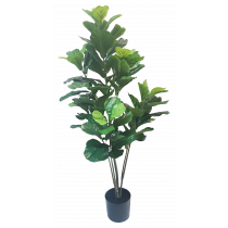 S2653Grn 5ft Green Fiddle Leaf Plant x 8 in Pot