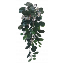 Hanging Stephanotis Bush x 8
