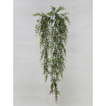 Boxwood Hanging Vine x 5 with Purple Berries