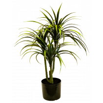 Yucca in a pot x 3 S2711Grn