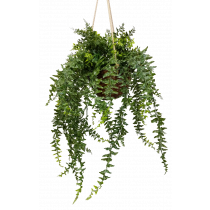 S2722Grn Bakers Fern in Hanging Basket