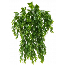 Artificial Green 56cm hanging Ruscus Bush x 5 S2745Grn