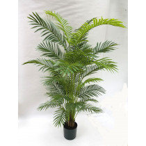 6ft golden cane palm areca palm S2765Grn