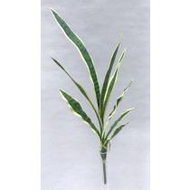 S2775Grn Sansevieria Spray