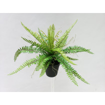 Ruffle Fern in black pot S2781Grn