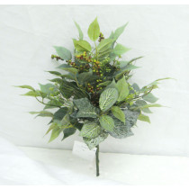 Ficus Fittonia Berry Bush S2783Grn