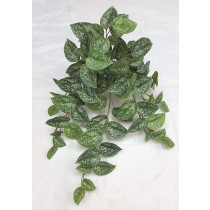 S2790Grn Silver Pothos Silvery Anne  Scindapsus Leaf x 8 79 Leaves