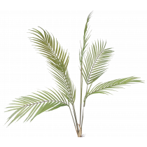 S2811Grn Areca Palm Leaves