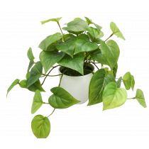Hanging Real Touch Philo Leaf Bush in White Pot S2827Grn