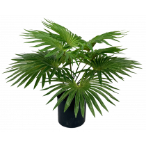 S2842Grn Fountain Palm in Pot