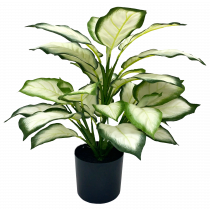 S2843Grn 43cm Real Touch Green White Golden Dieffenbachia in Pot