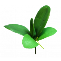 Large Orchid Leaf