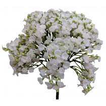 S3758Wht White Gyp Bouquet S3758Wht Babies Breath