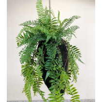 S3804Grn Hanging Mixed Fern Kokedama Large