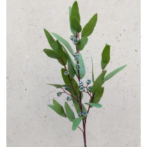 Gum Spray with Seed
