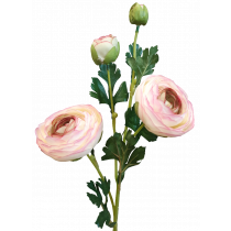 Light Pink Ranunculus Spray S3865LtPnk