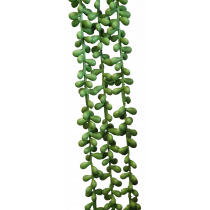 String of Pearls S3867Grn Succulent