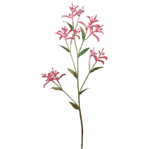 S3873Rd Red Peach Kangaroo Paw Spray