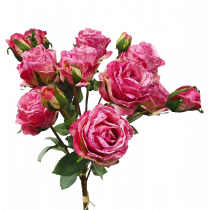 Dried Dark Pink Rose by 9 with rosebuds bouquet S3974DkPnk