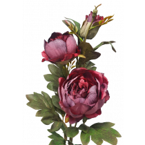 S3995Burg Burgundy  Dried look Peony Spray 2 Flowers & a bud