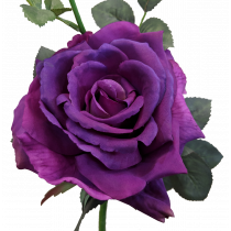 S5714 Purple Quiannie Rose