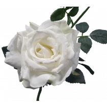 S5714Wht Queen Rose White Rose