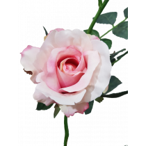 S5729 Salmon Pink Rose S5729SP Artificial Flowers