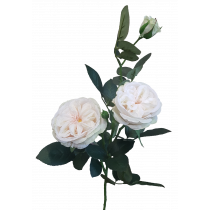 75cm Louis Rose Spray  By 3