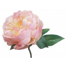 Cream pink peony Artificial flowers S5841CrmPnk