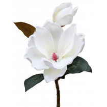 S5853NWht White Short Stem Magnolia