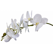 White Phalaenopsis Orchid S7506Wht