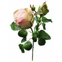 65cm Pink Cream Opening Rose with Rosebud S7544PnkCrm