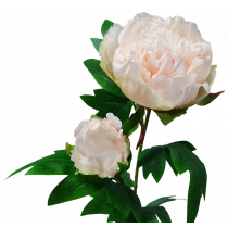 S7547Pch Peach Pink Peony Spray with Bud