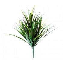 Drancena Grass