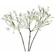 White Bellis Spray