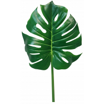 101cm Monstera Leaf