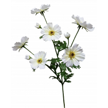 White Cosmos Spray by 3