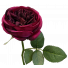 S5864Plm David Austin Rose Bailey Rose Plum
